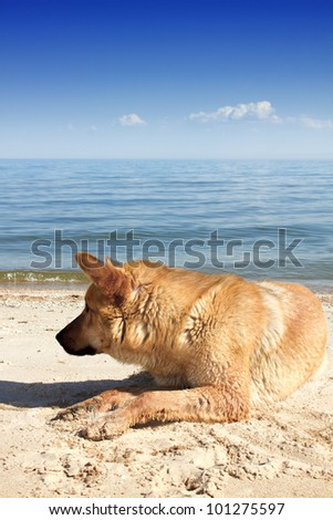 Dog lying on seacoast