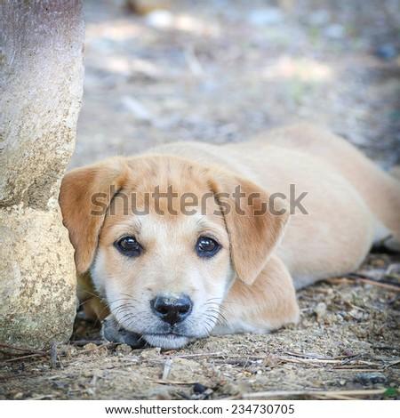 Dog lying on the floor - stock photo