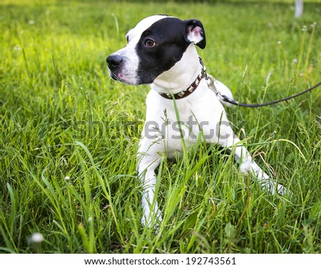 dog lying on the grass, dog looking to the side