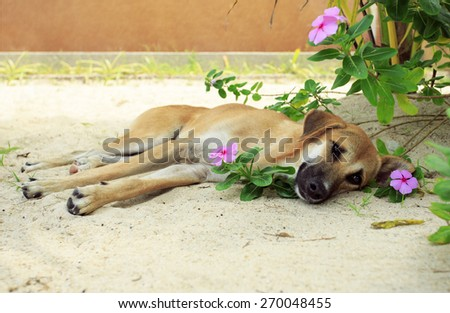 Dog lying on the sand in the flowering bushes. - stock photo