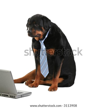 dog monitoring the activity on the computer, isolated on white, concept of internet security - stock photo