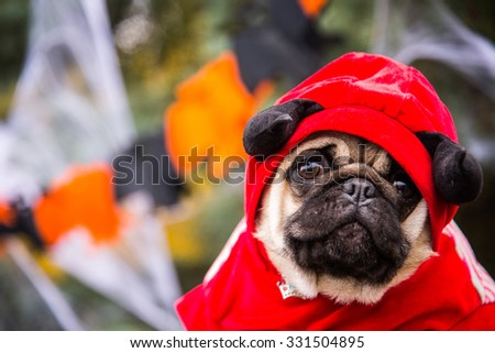 Dog Mops. A dog wearing a devil costume with horns - stock photo