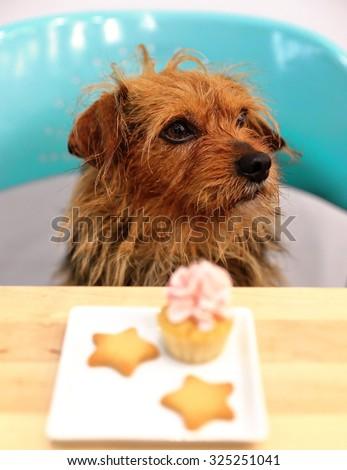 Dog & muffin - stock photo