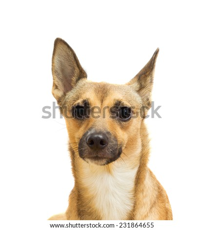 dog muzzle close-up on a white background isolated - stock photo