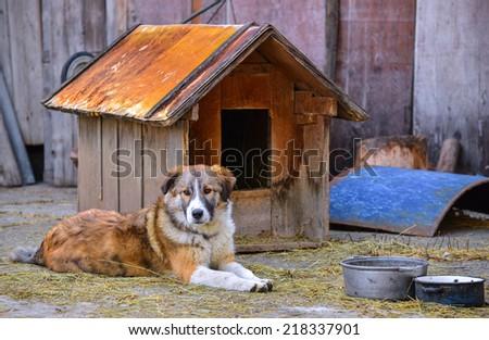 Dog near its house - stock photo