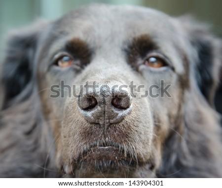 Dog nose close up. - stock photo