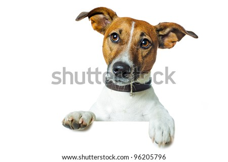 dog on a banner - stock photo