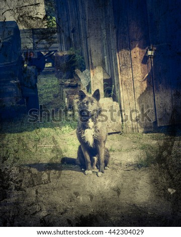 Dog on a chain at the door. - stock photo