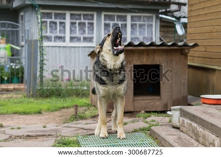 Dog on a chain. The dog protects the house. Vicious dog. The dog barks. dog on a leash. The German shepherd protects the house. The dog barks. Grin of a dog. Howl dogs - stock photo