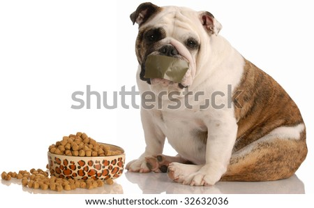 dog on a diet - english bulldog sitting beside full bowl of food with tape across mouth