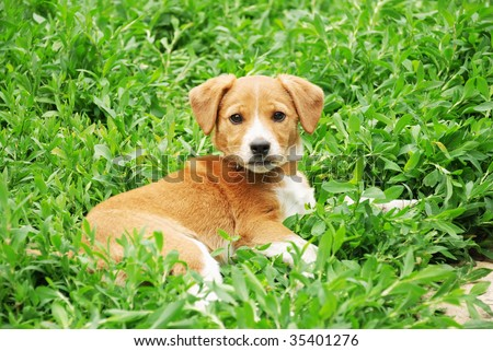 Dog on a green grass in the summer sunny day