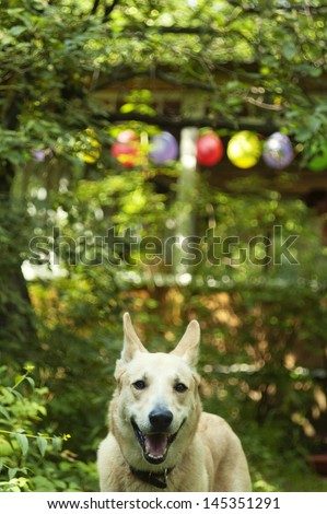 Dog on a party in country yard garden in summer - stock photo
