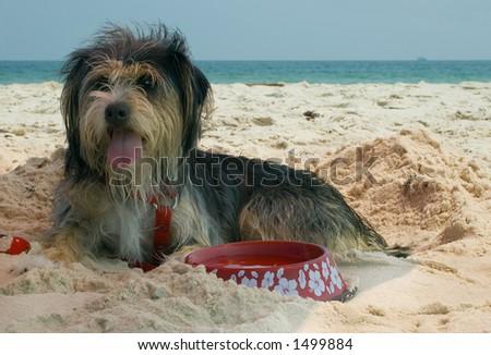 Dog on beach - stock photo
