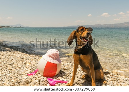 Dog on beach wearing sunglasses with toys and the sea as background.  - stock photo