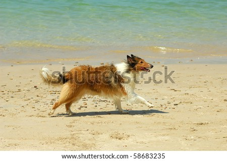 dog on beach with  toy - stock photo