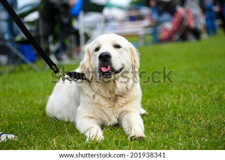 Dog on green grass