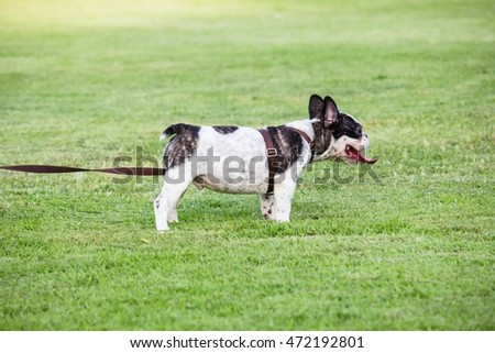 Dog on green grass in the public park