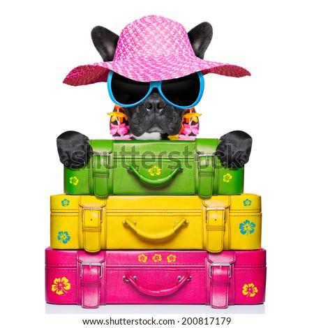 dog on holidays with umbrella and lot of luggage - stock photo