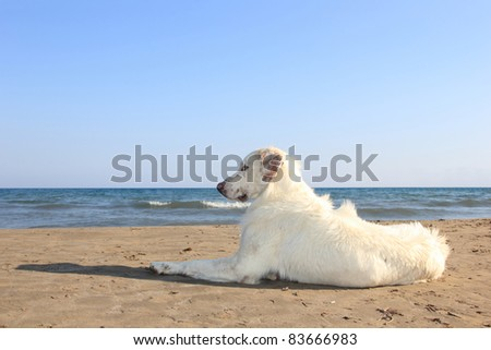 dog on the beach in greece - stock photo