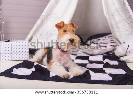 Dog on the mat next to a gift on a background of the wigwam - stock photo