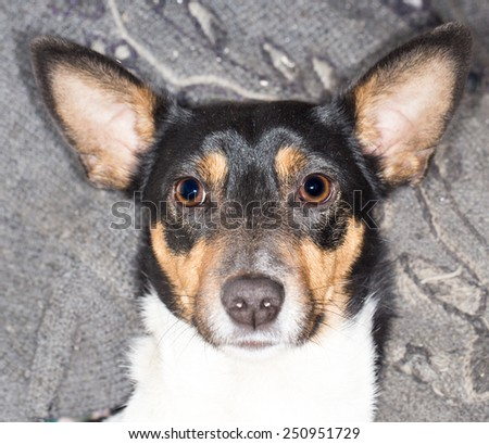 dog on the nature - stock photo
