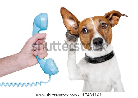 dog on the phone male hand listening carefully - stock photo