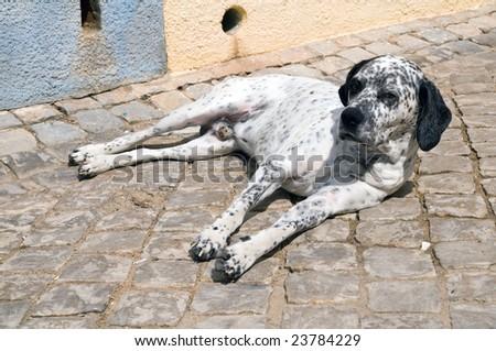 Dog on the street - stock photo
