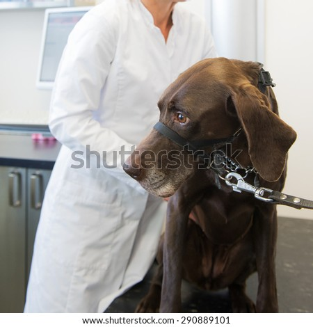 Dog on the table at the veterinarian - stock photo