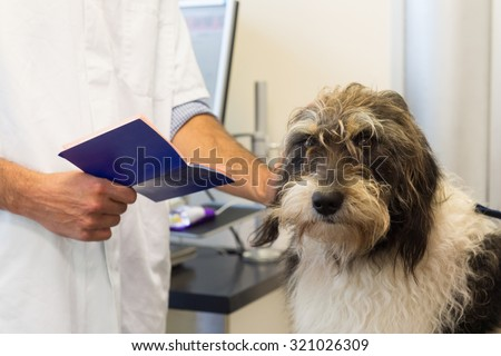Dog on the table by the veterinarian