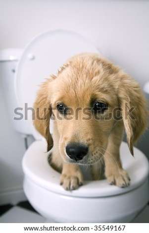 Toilet training doberman puppies