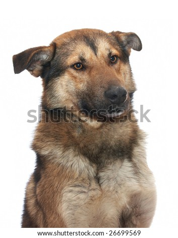 Dog on the white background