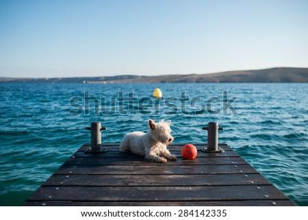 Dog on vacation - stock photo