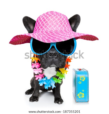 dog on vacation wearing  fancy sunglasses and funny flower chain with luggage