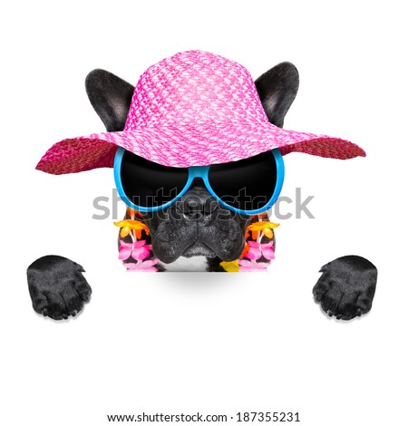 dog on vacation wearing  fancy sunglasses behind a white blank placard and banner - stock photo