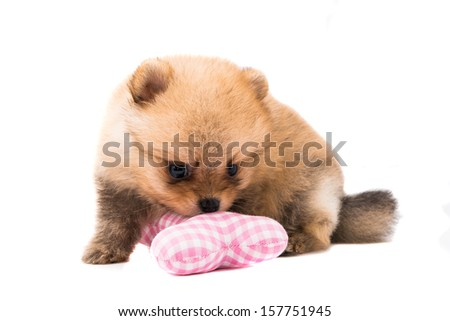 dog on white backgrounds - stock photo