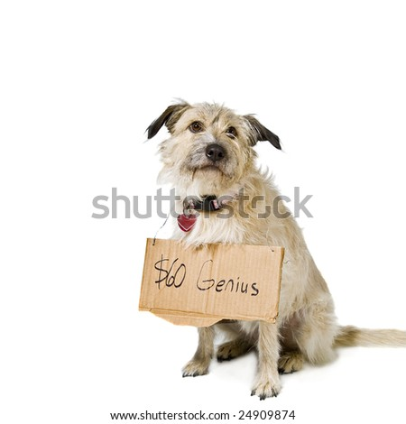 Dog on white wearing a sign. Copy Space.
