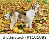 Dog outside on a yellow leafs surface. - stock photo