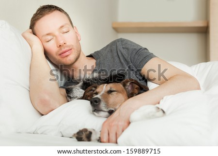 dog owner in bed with two cute dogs all sleeping - stock photo