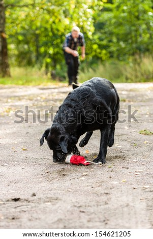 Dog owner trains his labrador retriever on outdoor, vertical format - stock photo