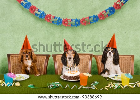 Dog party - stock photo