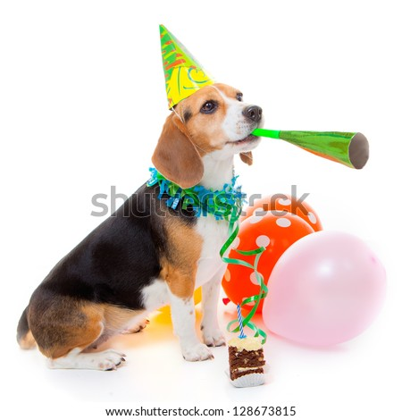 dog party animal celebrating birthday or anniversary - stock photo