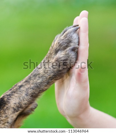 Dog paw and human hand