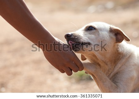 Dog paw and human hand - stock photo
