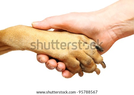 Dog paw and human hand doing handshake. Isolated over white. - stock photo