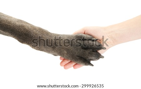 Dog paw and human hand, isolated on white - stock photo