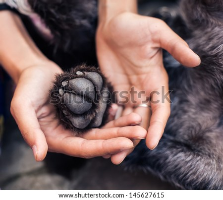 Dog paw in human palm