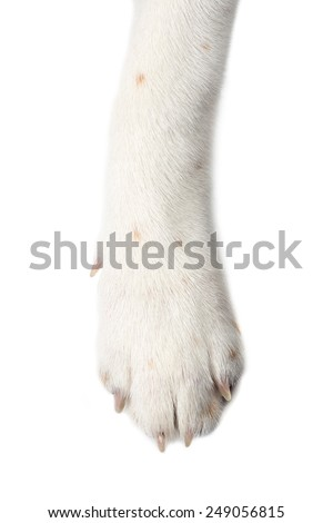 dog paw isolate on white background. - stock photo