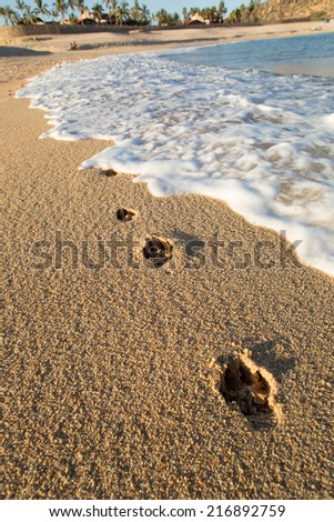 dog paw prints on the beach sand with sea water washing it away - stock photo