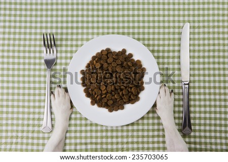 Dog paws in front of a white plate full of feed. Tasty food for dogs. School of good manners  - stock photo