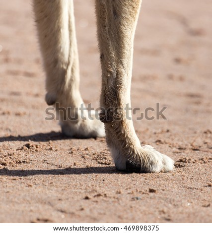 dog paws in the sand